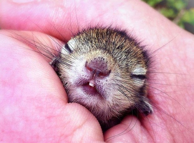 Baby Palm Squirrel Rescued By Wildlife Filmmaker 1