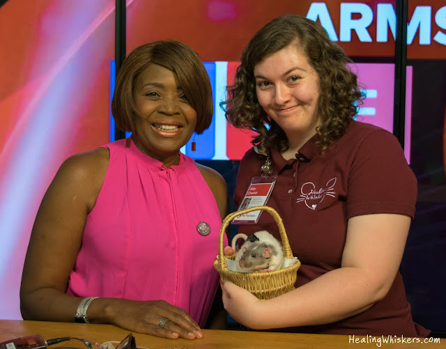 Vincent the Therapy Rat and Abby Chesnut with Dee Armstrong