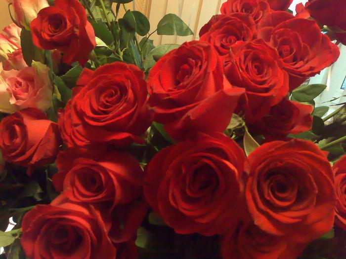 Mensagens De Bom Dia Flores: *sol* Gifs,mensagens E Imagens: IMAGENS DE FLORES