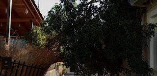 Δέντρα ξεριζώθηκαν στην Καλαμάτα από τους ισχυρούς ανέμους
