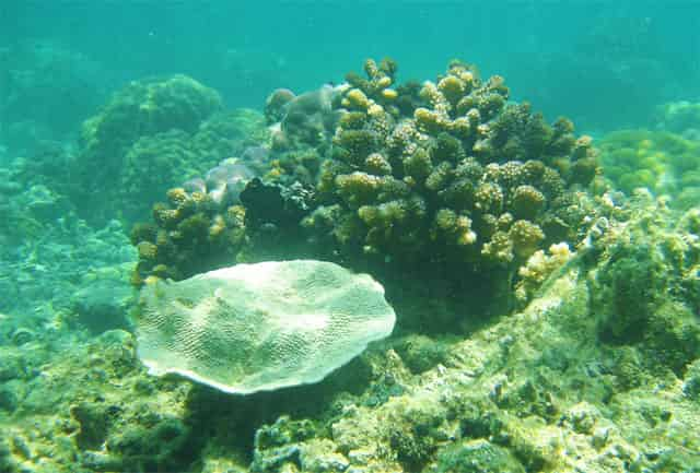 Photo of Coral Reefs under Calaguas sea