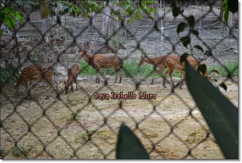 Pengalaman di Deerland, rusa jinak