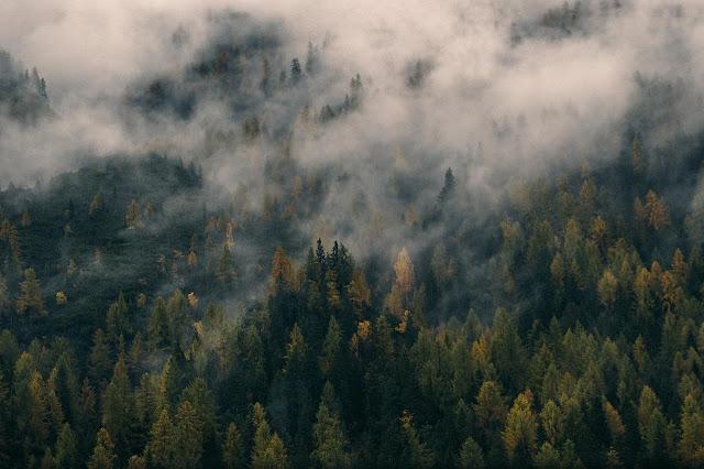 10 Hutan Terbesar dan Terluas di Dunia Saat Ini - munsyafandi.com