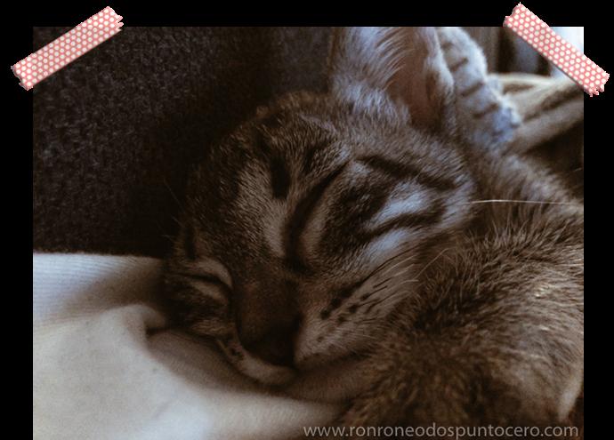 Una vida con tres gatos - Petit