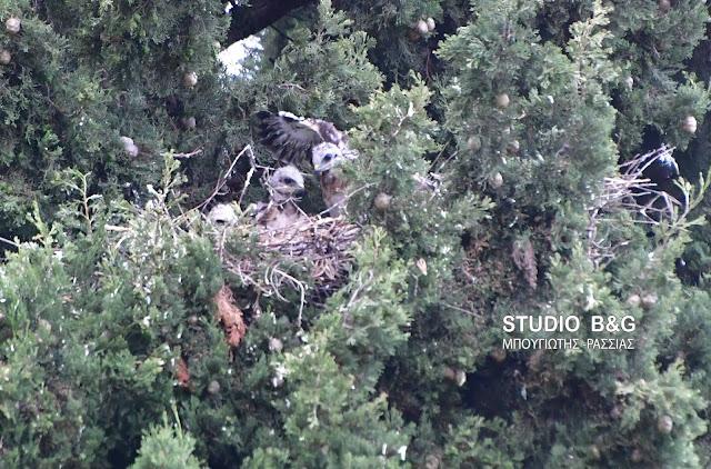 Η φωτογραφία της ημέρας: Σφύζει από άγρια ζωή το Ναύπλιο