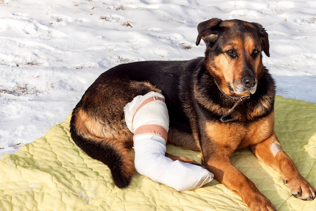 Why Is My Dog Limping?  Reasons Your Dog Might Be Limping and What You Can Do
