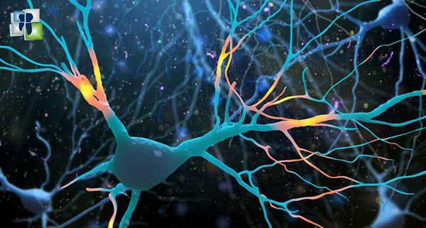 كيفية انتقال السيالة العصبية