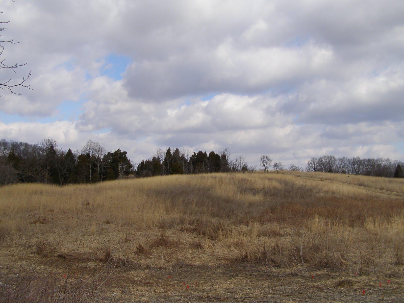 Blue Jay Barrens Winter Field Mowing
