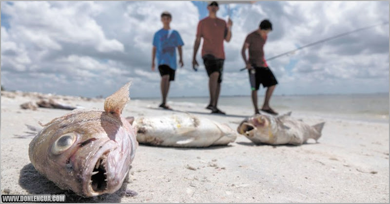 Miles de peces llegaron a la orilla de una playa en Margarita