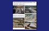 EΛΛΗΝΑ KOIMHΣΟΥ - 32 ΝΕΕΣ Πόλεις ΛΑΘΡΟΜΕΤΑΝΑΣΤΩΝ EN ΜΕΣΩ LOCKDOWN