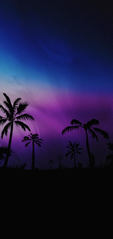 palms silhuete night sky