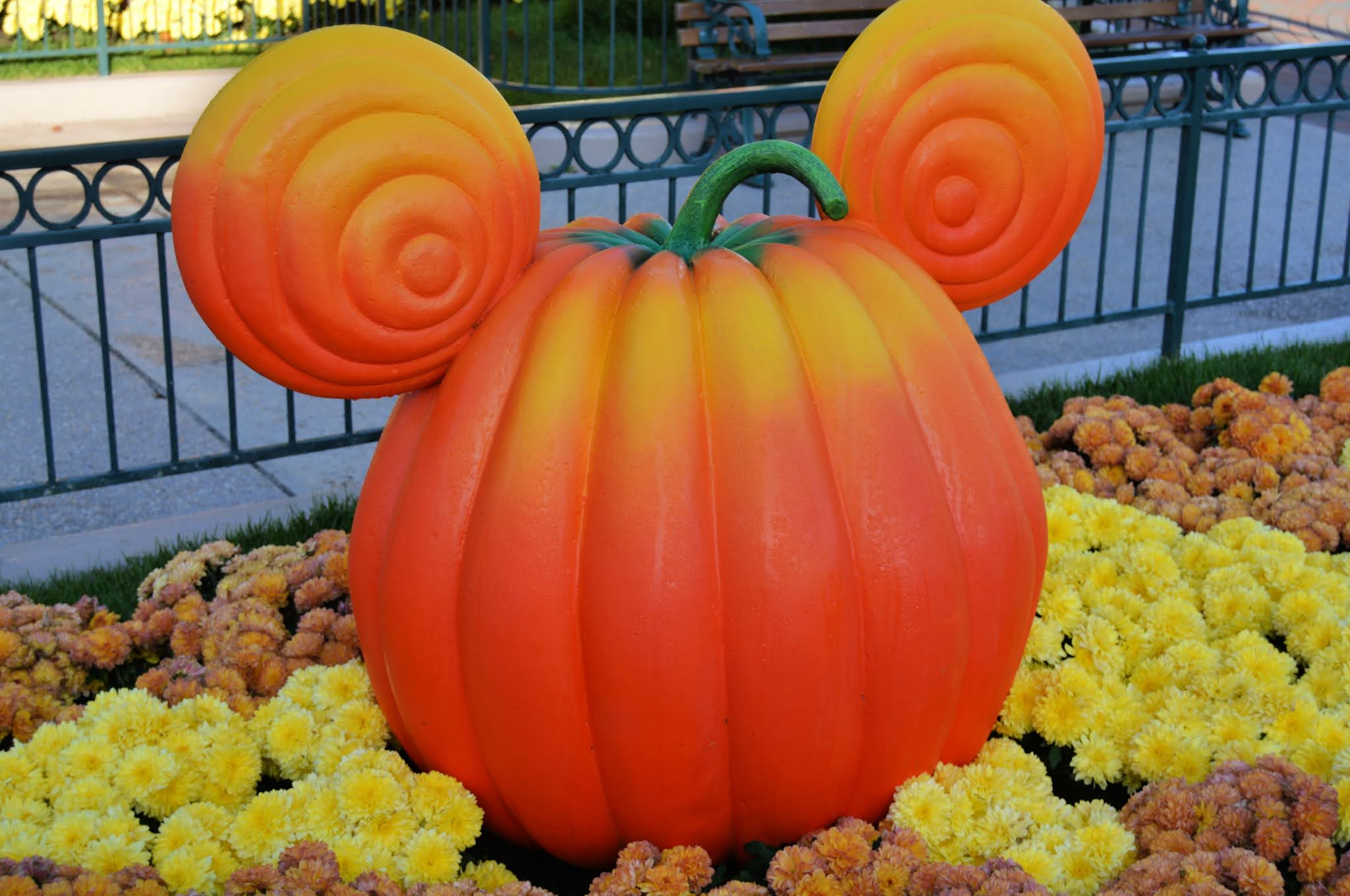 Pumpkin at Disneyland Paris