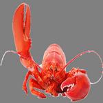 lobster in spanish