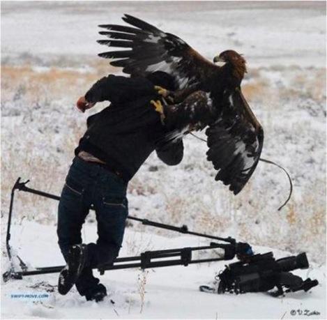 Aguila Ataque Fotografo