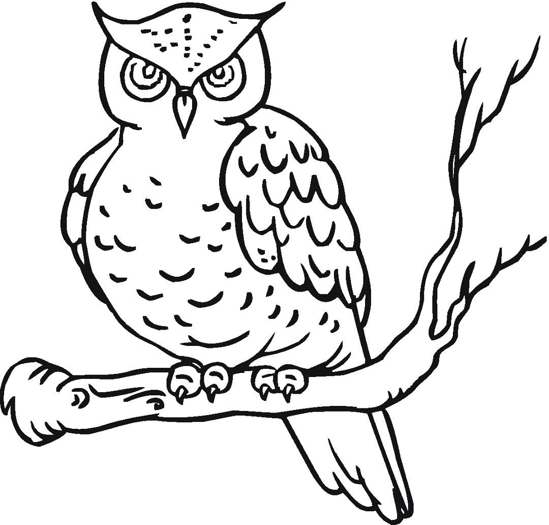 Sketsa Gambar Burung Hantu Terbaru