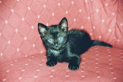 Katzenbaby auf dem Sofa