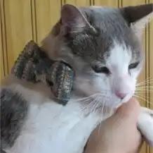 Collar para Gato a Crochet