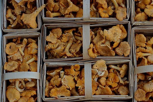 Jamur - 9 Sayuran Yang Membantu Dalam Diet Anda Untuk Membakar Lemak Perut