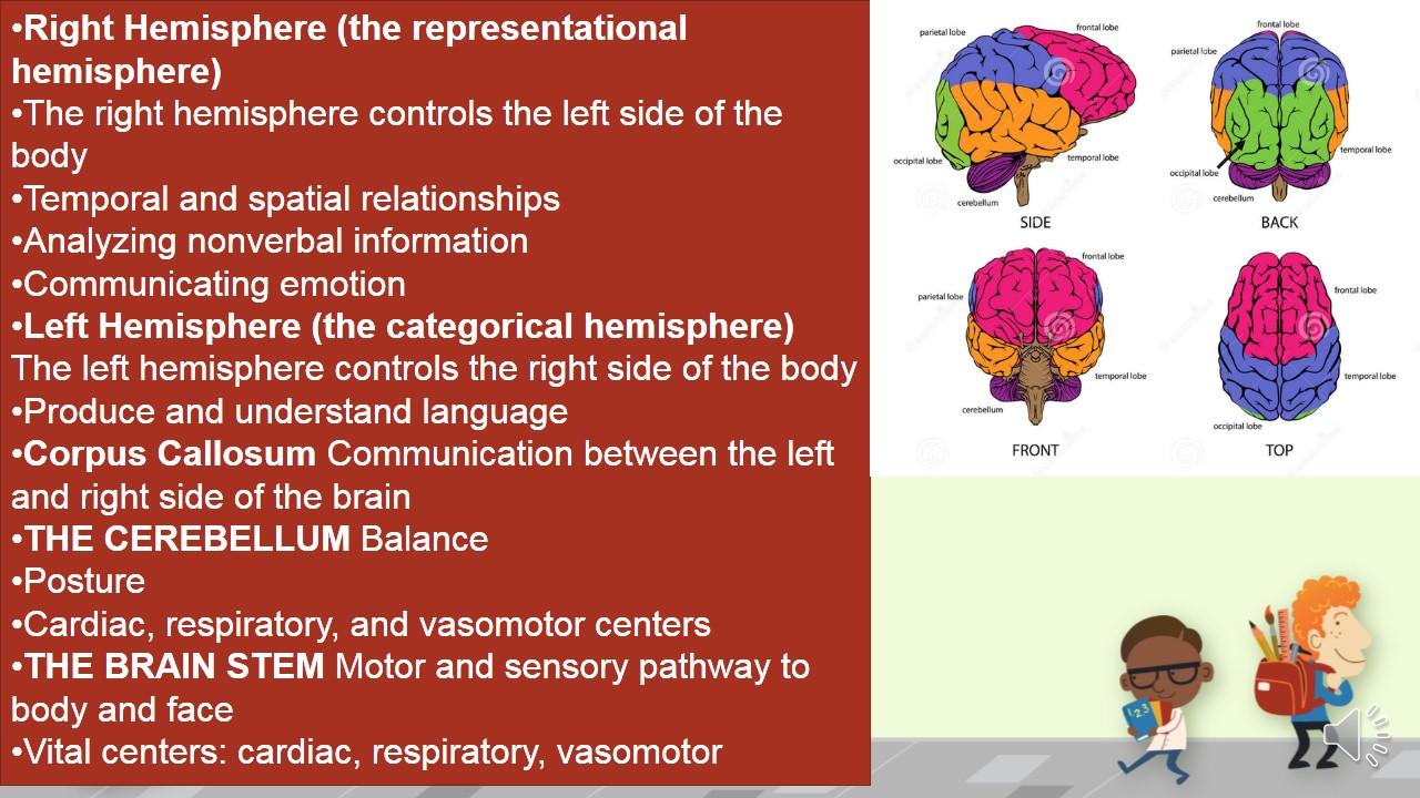 Careers to study the brain