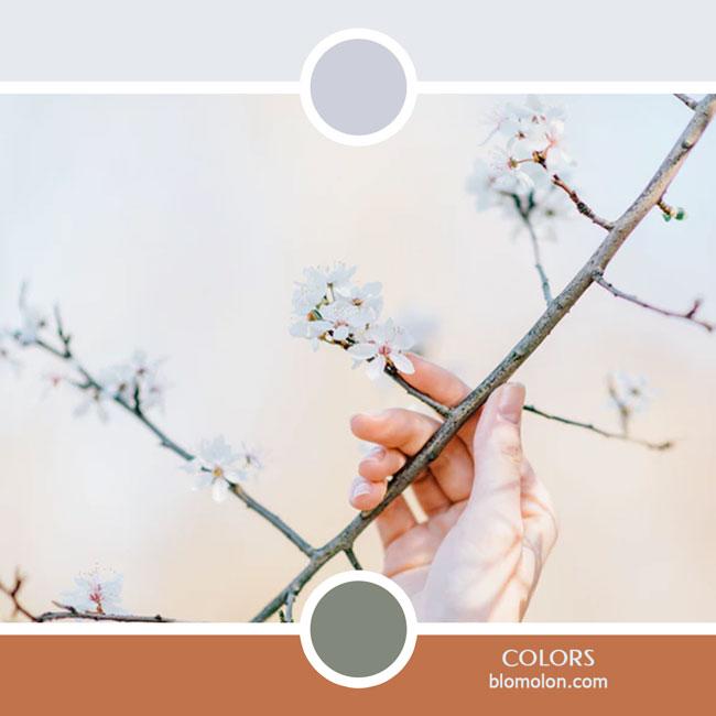 variedad_en_color_color_52