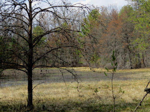 Great Lakes Coastal Plain Marsh