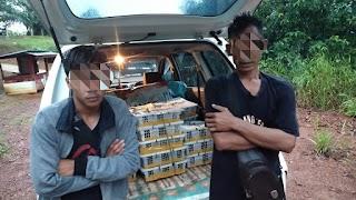 Patroli Pamtas Satgas Yonif 133/YS Gagalkan Penyelundupan 150 Ekor Burung Kacer Ilegal