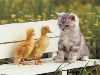 Kucing Lucu, Imut, Unik dan Gokil,  Terbaru