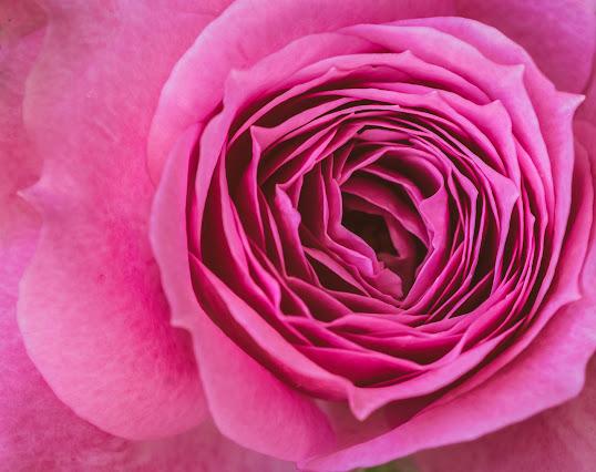 أحلى الورود ورق حائط 11