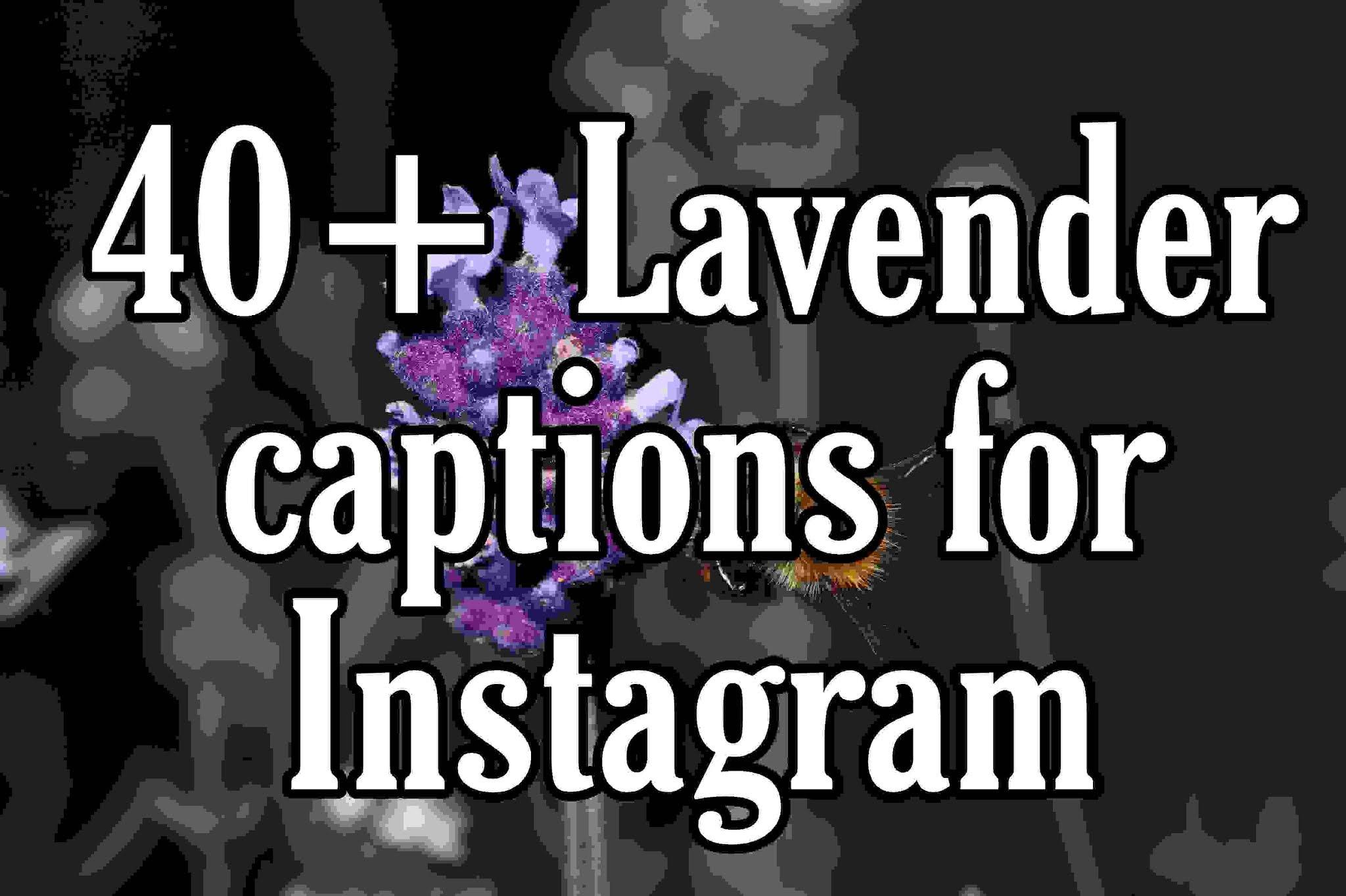 Lavender captions for Instagram