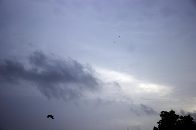 skywatch, monsoon, clouds, birds, bandra east, mumbai, india, evening,