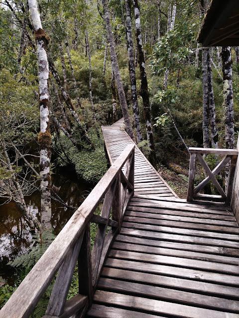 Sendero Lago Negro, Parque Pumalín, Chile