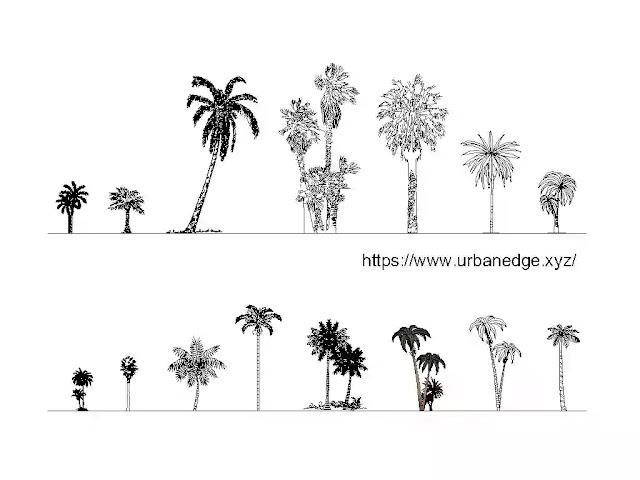Palms tree elevation cad blocks download - 15+ Palm tree dwg blocks