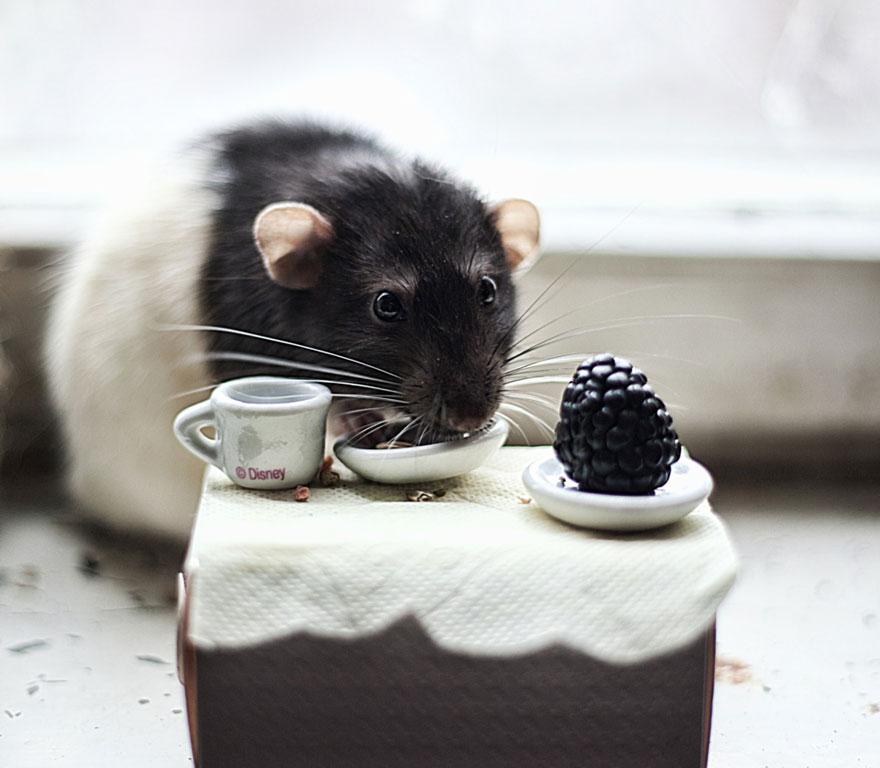 cute-pet-rats-10
