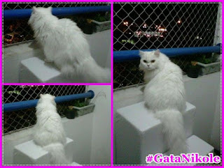 escadas panorâmicas para gatos