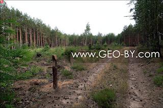 Свежая вырубка леса