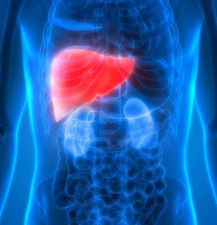 الكبد فى جسم الانسان