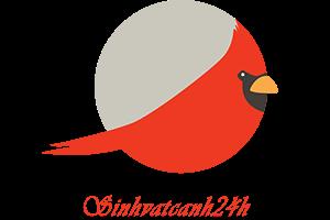 Sinhvatcanh24h