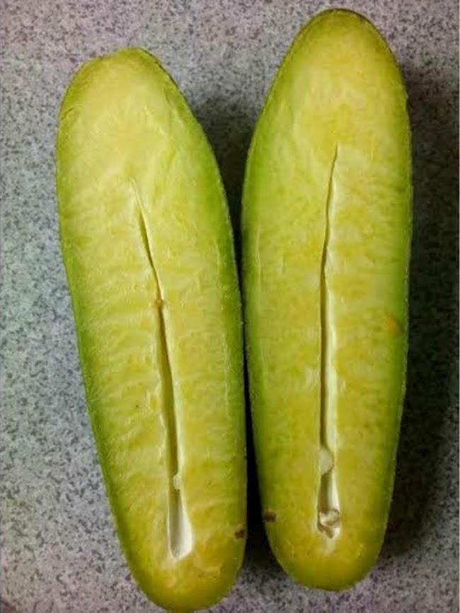 Bibit tanaman alpukat non biji Jawa Timur