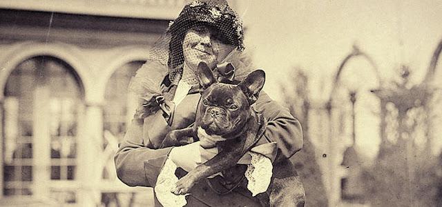 el bulldog francés características y cuidados