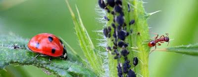 Pragas-de-insetos