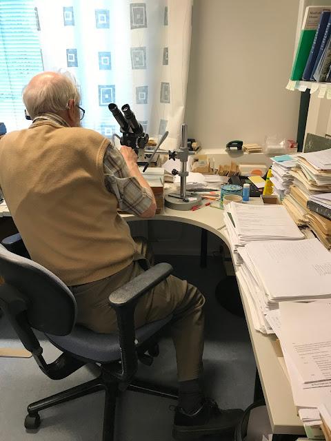 Ulvinen työssään mikroskoopin kanssa. Työpöytä on täpötäysi, mutta hyvässä järjestyksessä.