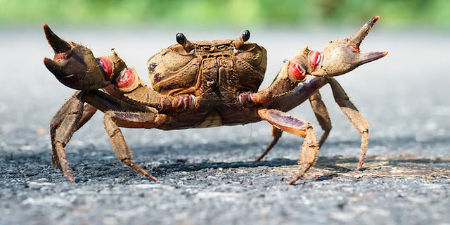 Interesting Facts About Crabs