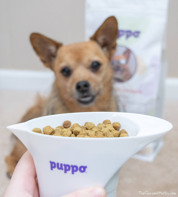Jada and Puppo dog food kibble