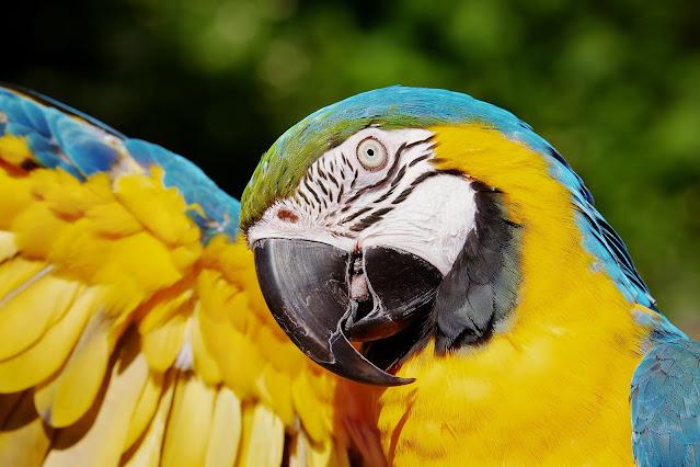 """Alt =""""Birds can be a good pet"""""""