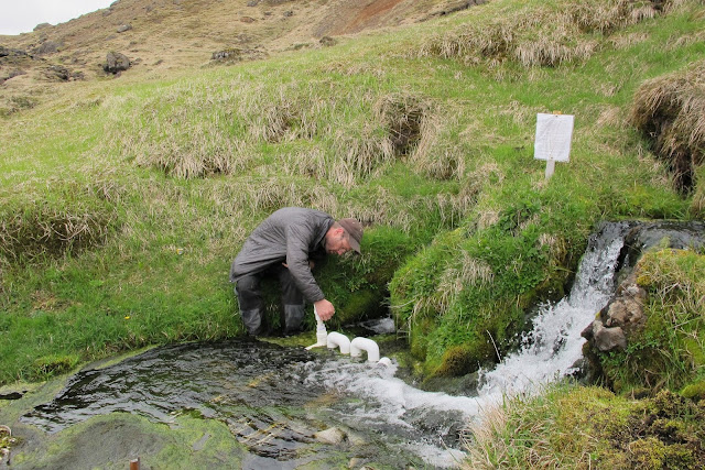 In Iceland stream, possible glimpse of warming future