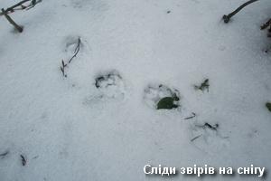 Звірячі сліди у снігу