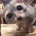 Κορωνοϊός: Βλέποντας τα ζώα στους ζωολογικούς κήπους από το σπίτι