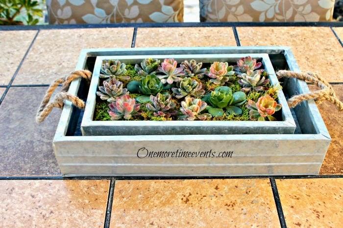 Succulent Garden Centerpiece