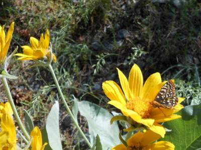 butterflies, yellow flowers, high desert, right or wrong, spiritual path, spiritual awakening