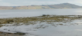Focas en los Fiordos del Oeste, Islandia. Seals in the West Fjords, Iceland.